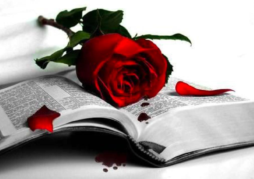 Janusz Niżyński róża