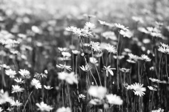 Na łące | Miniatura
