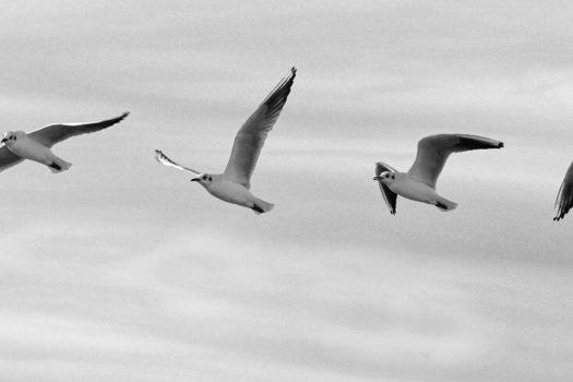 (Po)wietrze | Wiersz